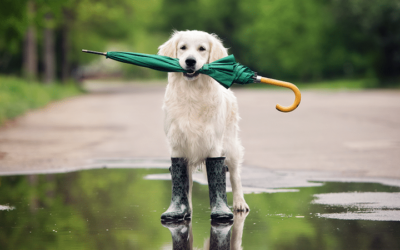 Taking Care of Pets Before and During a Storm